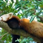 寝起きの背中や腰痛が和らぐ敷布団の使い方