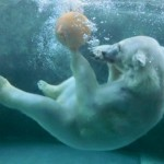 旭山動物園の園内所要時間足りる?人気の動物と冬の見どころ