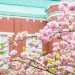 造幣局の桜の通り抜けで混雑を避けるならこの日このアクセスで!