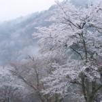 吉野山の花見におすすめのルートとアクセスは?