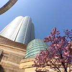 六本木ヒルズの毛利庭園でゆったり花見と桜祭り以外の見どころは?