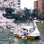 お花見デートで失敗せずに上野公園の桜をゆっくり楽しむには?