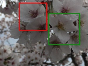 2016-04-03 13.39.57_sakura1