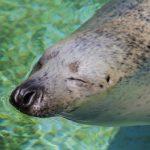 旭山動物園でお盆に駐車場の混雑避けて夜の動物園を楽しむには?