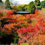 京都の紅葉シーズン足が悪い母親には徒歩がキツい 東福寺は車椅子が救世主に!?